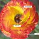 Dolby Vision: veelbelovend HDR-formaat